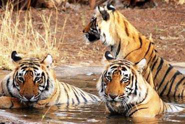 Wildlife and Cultural Highlights of India