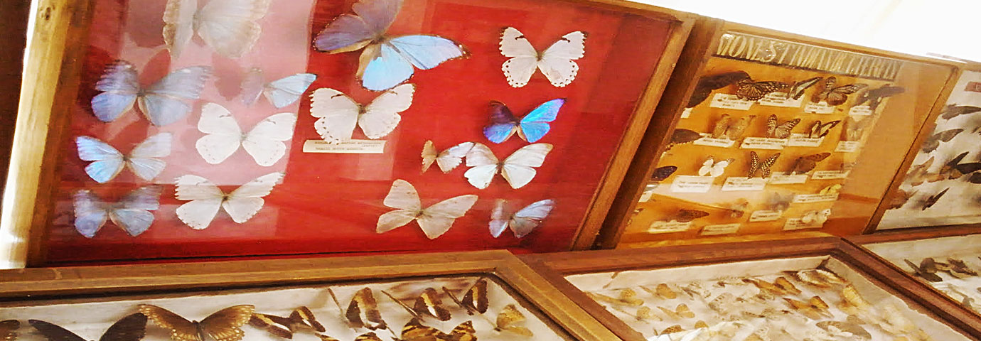 Butterfly Museum Shillong