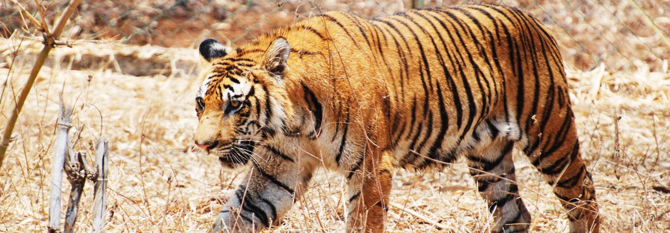 Manas Tiger Reserve