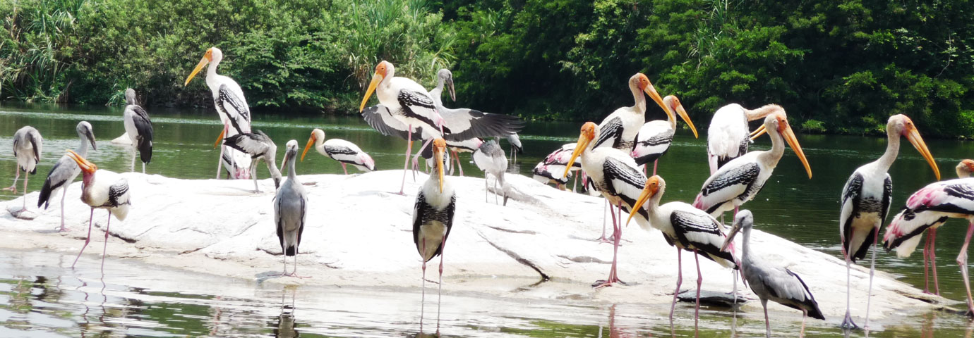 Ranganthittu Bird Sanctuary